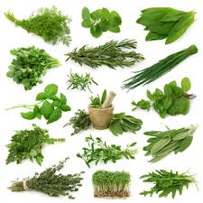 Herbes & Epices